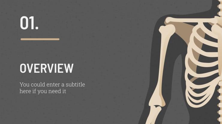 Cours d'anatomie : Modèles de présentation