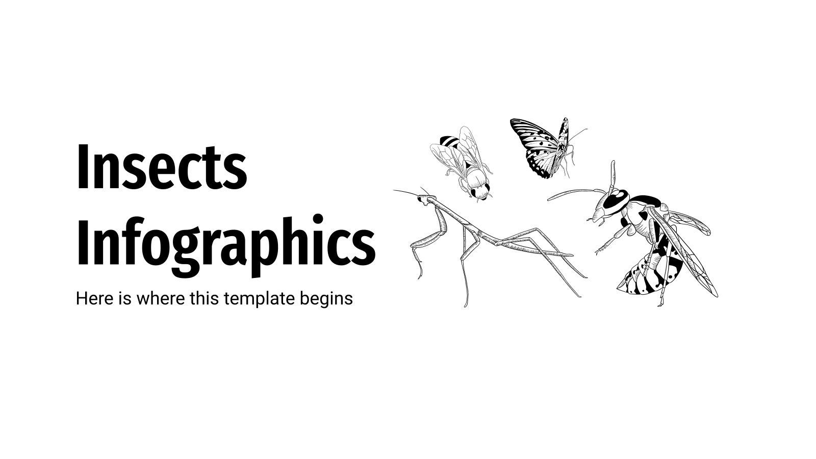Modelo de apresentação Infográficos de insetos