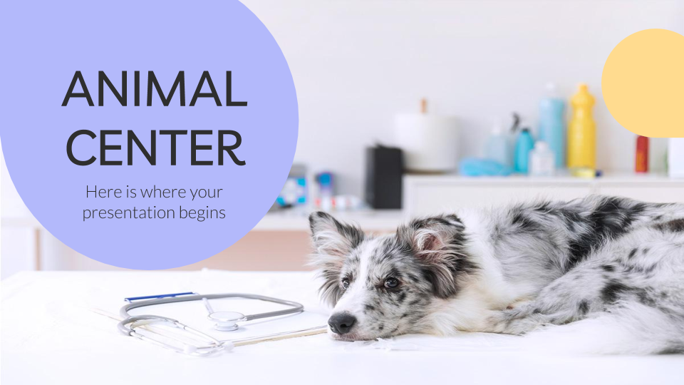Animal Center presentation template
