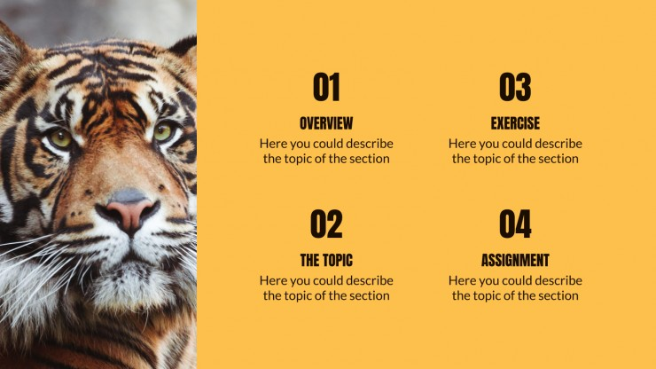 Animal Kingdom Lesson presentation template