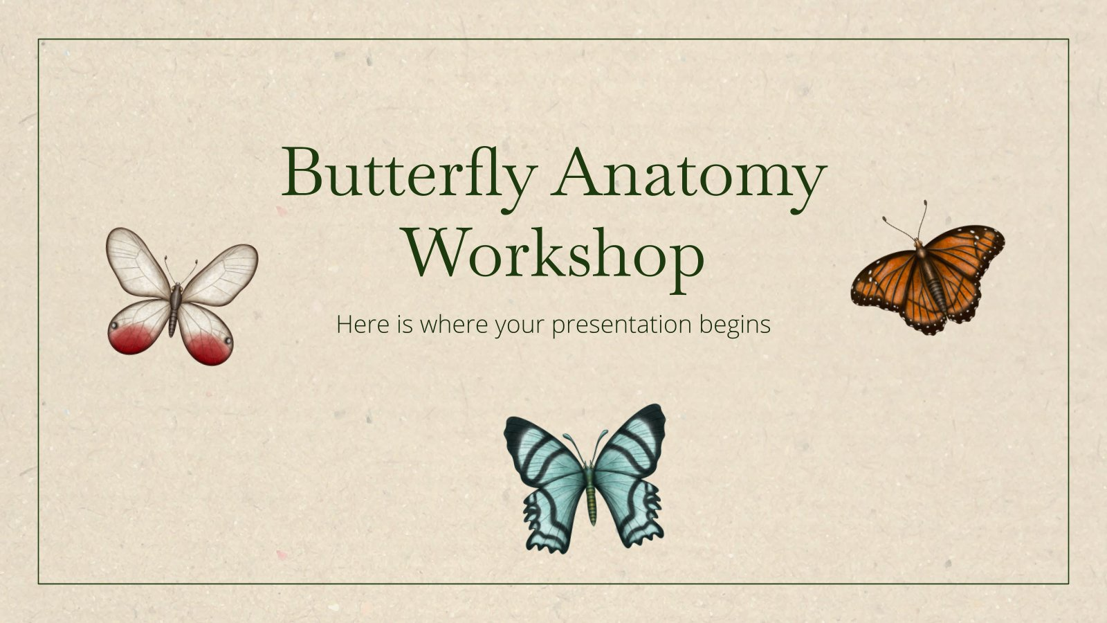 Butterfly Anatomy Workshop presentation template