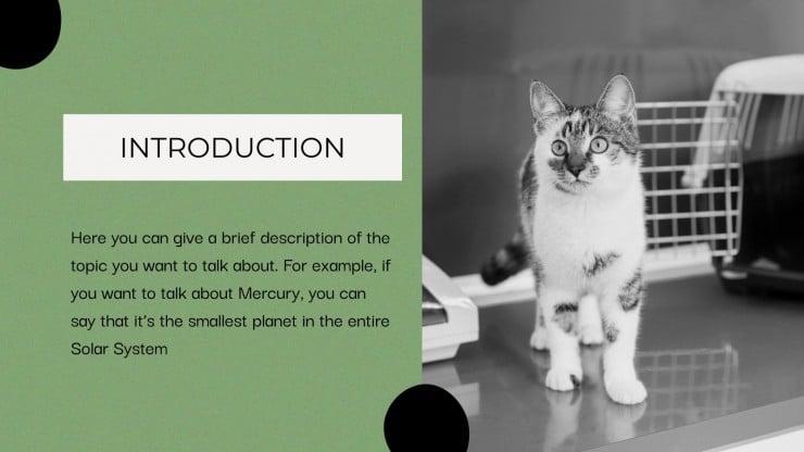 Les maladies des chats : Modèles de présentation
