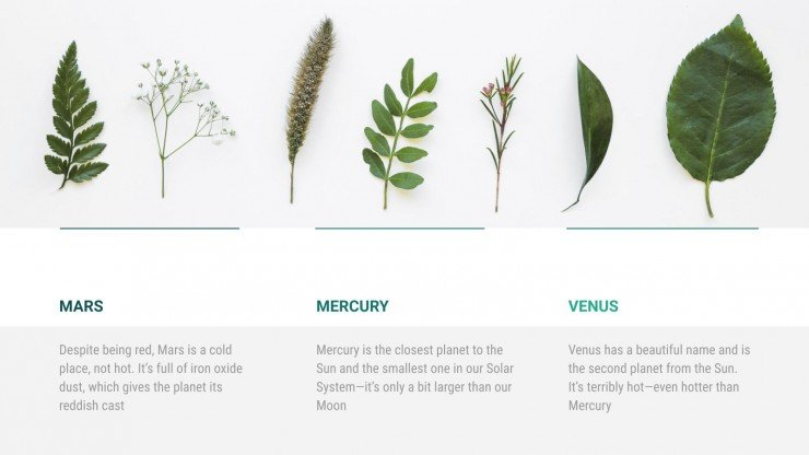 Modelo de apresentação Verde botânico