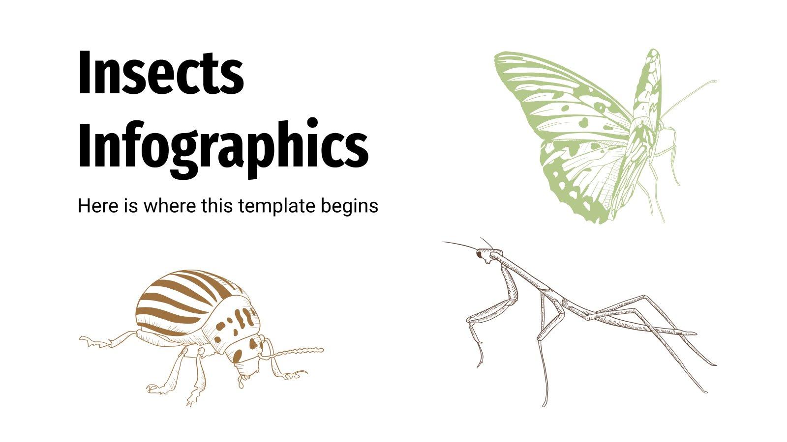 Infographies sur les insectes : Modèles de présentation