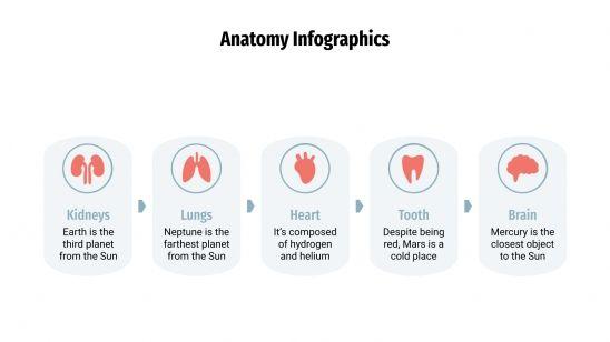 Infographies de l'anatomie : Modèles de présentation