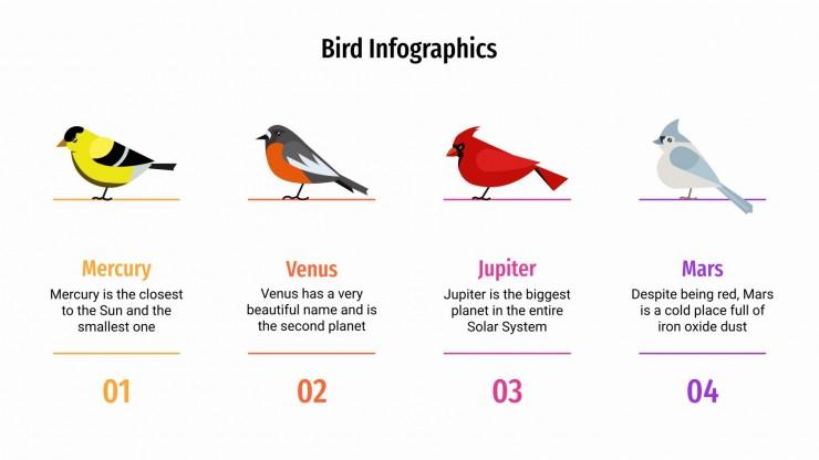Infographies sur les oiseaux : Modèles de présentation
