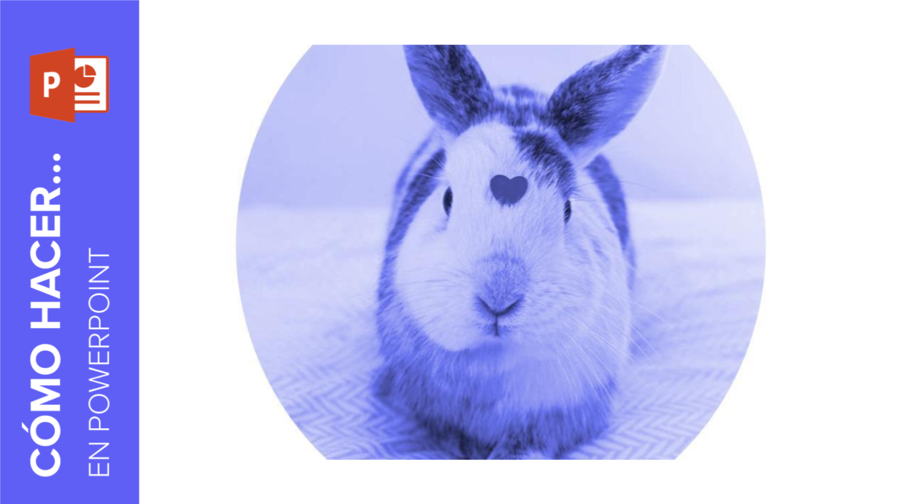Cómo aplicar filtros a tus fotografías en PowerPoint | Tutoriales y Tips para tus presentaciones